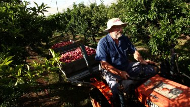When Ed Beil of Wanaka Orchard bought his farm, there were more than 70 orchards in the Oakdale district. Now there are two, he says.