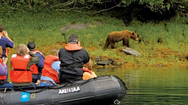 A trip around the still waters of Baranof Island is likely to lead to a brown bear encounter.