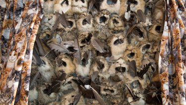 """Inside Barry Green's house is an artwork called """"Curiosity"""". The kitten curtains open up to reveal a panel about a metre wide comprising cat heads and skins with native bird feathers stuffed in their mouths, a comment on the impact of feral cats on native wildlife."""