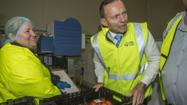 Handle with care: Prime Minister Tony Abbott meets tomato packer Sonya Mackay in Cairns on Friday.