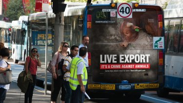 A tale of two campaigns: Animals Australia raises awareness on Sydney buses about live animal exports.