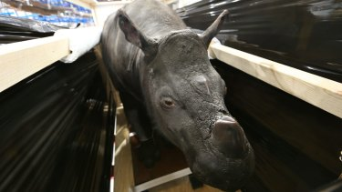 The Australian Museum's new offsite storage facility contains more than 200,000 specimens, including a Sumatran hairy rhinoceros.