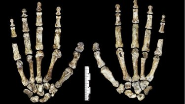 The features of <i>Homo naledi</i> are similar to other early hominids, with human-like face, feet and hands.
