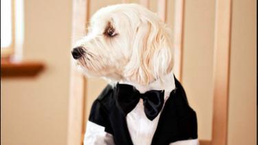 The nervous groom?