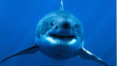 New research sheds light on WA's white shark population