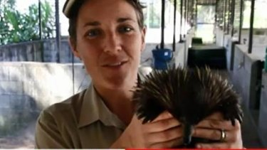 A Currumbin Wildlife Sanctuary carer takes care of a friend of Piggie, after he was taken on Saturday night.