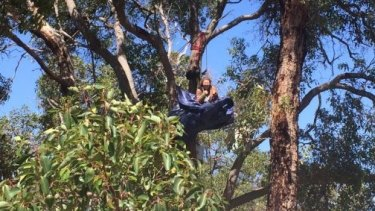 A protester camping in a tree at the Roe 8 site.