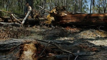 The Labor government promised to tighten Vegetation Management Act guidelines when it won the 2015 state election and restrict land clearing.