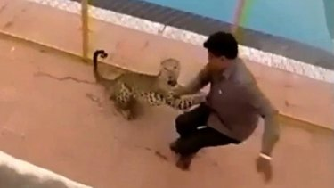 Scary encounter: The leopard chases down a man on the school grounds.