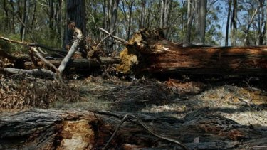 Land-clearing is on the increase, lifting emissions.