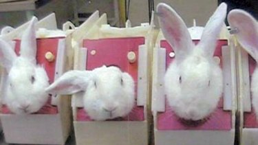 The Coalition plans to ban the sale in Australia of cosmetics tested on animals.