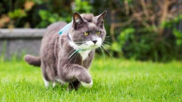 Researchers say cats go much farther their owners realise, especially at night.