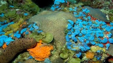 The UN's mesophotic coral ecosystem report collates reports from around the world.
