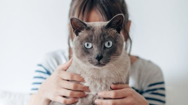 Social media is being torn apart by a fictional short story titled 'Cat Person' that ran in the New Yorker.