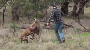 Dog 'Max' tries to escape the kangaroo's grip.