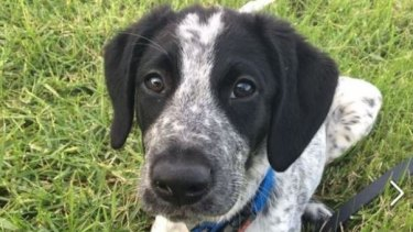 Grizz the dog was shot dead at Auckland Airport.