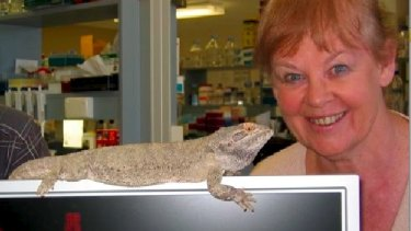 Professor Jenny Graves of Latrobe University is collaborating with BGI and the University of Canberra to find out more about dragon lizards.