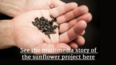 MH17 Planting Hope Sunflower Project
