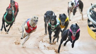 Greyhound trainers caught live-baiting will now face more hefty penalties.