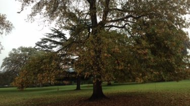 Central Gardens in Hawthorn - a place to exercise the dog, rest one's weary bones or reflect on the wonder of Nature.