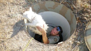 An RSPCA inspector lifts a dog out of the bunker.
