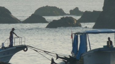 The controversial Taiji dolphin kill was the subject of the Academy Award-winning documentary <i>The Cove</i>.