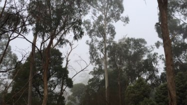 The fog was like smoke in parts of the Dandenong Ranges on Saturday.