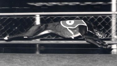 Greyhound racing began in NSW in 1927. It wasn't long before there were problems.