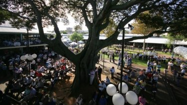The Moreton Bay Fig at Newmarket Stables, will be retained as part of the Cbus project.