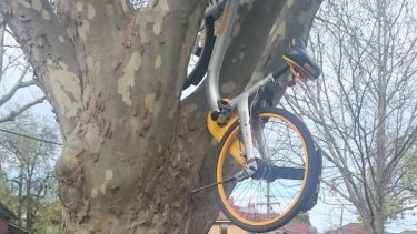 A oBike parked up a tree in Melbourne.