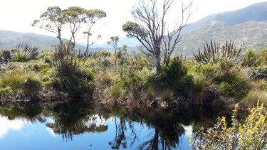 The remote area in south-west Tasmania where the devil droppings were found.