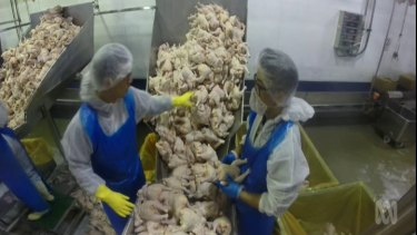 Factory workers working with poultry on Four Corners.