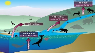 An interlinked system of animals carry nutrients from ocean depths to deep inland, through their poo, urine, and, upon death, decomposing bodies. Here, the red arrows show the estimated amounts of nutrients that were moved. Grey animals represent extinct or reduced densities of animal populations.