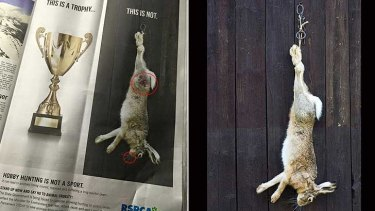 (Left) The RSPCA advert as featured in The West Australian newspaper, with the digitally altered hare. (Right) The original picture.