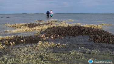 Researchers inspected 84 reefs and found coral mortality rates of 50 per cent or more in the north of the Great Barrier Reef.
