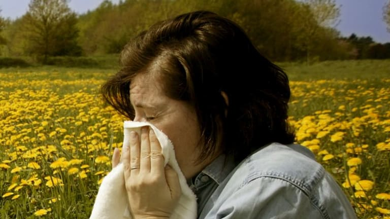 Pollen counts have peaked in December this year.