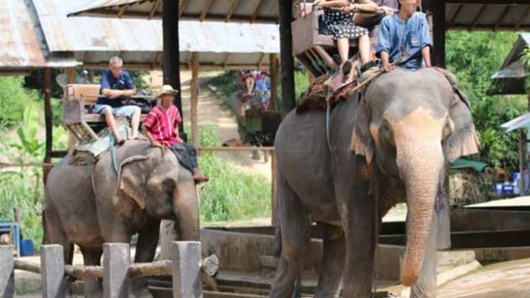 Elephant riding has been listed as one of the world's cruellest wildlife tourist attractions.