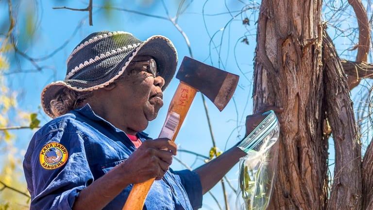 Karajarri Senior Ranger Jess Bangu collects samples for a biodiversity survey near Bidyadanga community in the Kimberley.