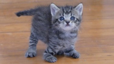 Three kittens with forelimb abnormalities are on the mend thanks to public donations.