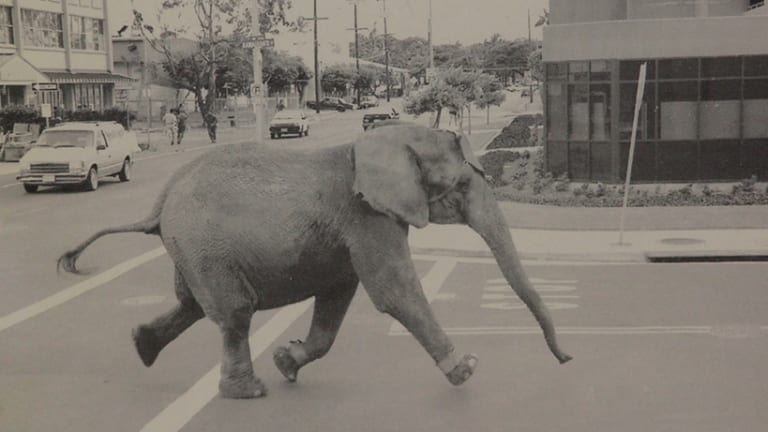 Tyke running through the streets of downtown Honolulu on August 20, 1994.