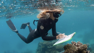 Researchers will be studying which corals have survived the heatwaves best, and why.