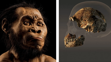 Remarkable find: fossil fragments of a relative of the human species found in Africa.
