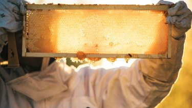 Researchers show just how effective manuka honey is in