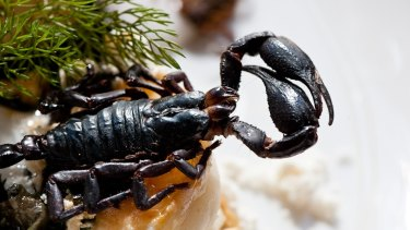 Public Bar and Restaurant in Brisbane'™s CBD used to serve a dish of wood-roasted scorpions with ˜lobster snow, seaweed, pickled ginger foam and scampi.