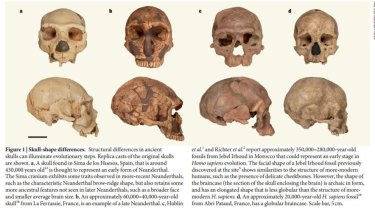 Comparison of early Neanderthal and late Neanderthal skulls (A and B); and Irhoud human and late human skulls (C and D) showing that evolution of the cranium can occur within a species.