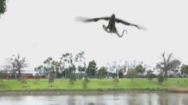 Real or fake? Hawk throws a snake at family enjoying lunch by the Yarra River.