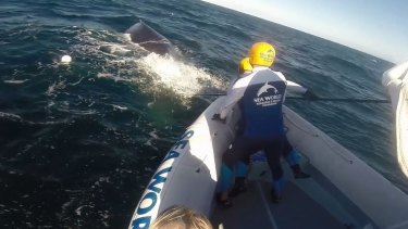 A whale was freed from shark nets on the Gold Coast by a Seaworld rescue team