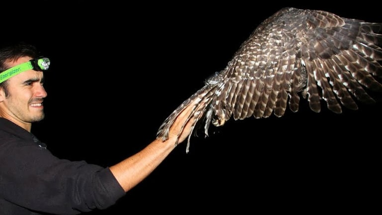 Deakin University honours student Nick Bradsworth releasing a powerful owl in suburban Melbourne this month.