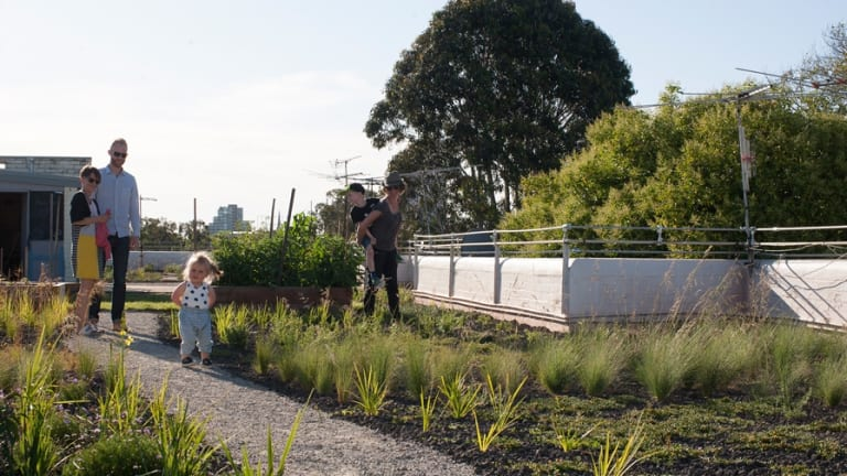 Westbury Street Rooftop Garden East St Kilda. & Apartment residents build green roof from scratch