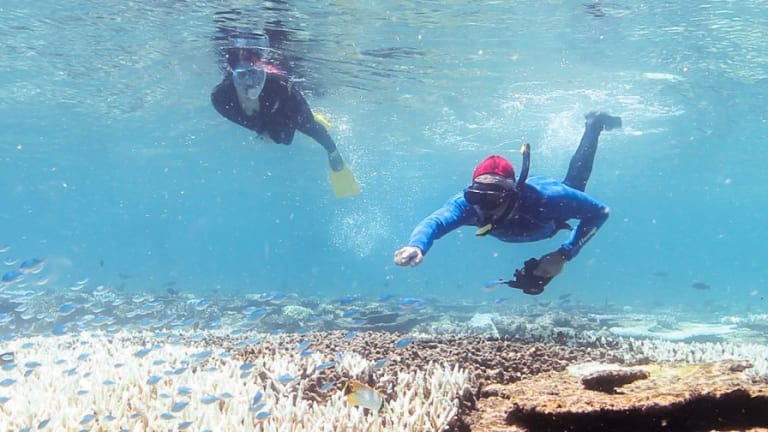 Snorkellers looking at bleaching corals off Port Douglas in March this year. The Great Barrier Reef generated 69,000 jobs in 2011-12, according to a 2013 Federal Government study.